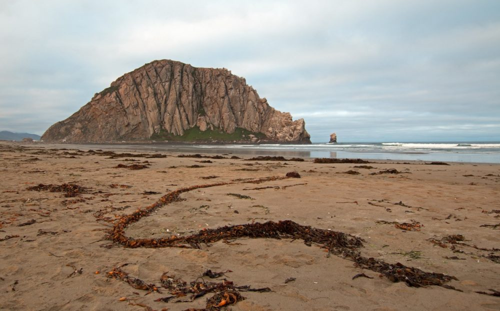 Morro-Rock-City-Beach-Morro-Bay-CA-apr17-bryce-10-Large-1000x622.jpg